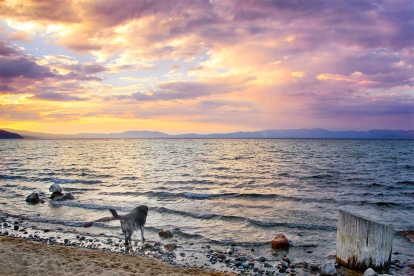 Obie T. Dogg enjoys the sunset on Lake Tahoe