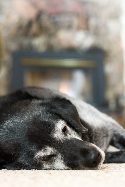 Obie naps in front of the fire
