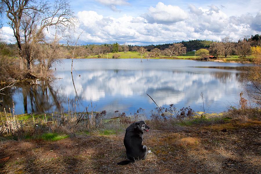 Outingdale Pond