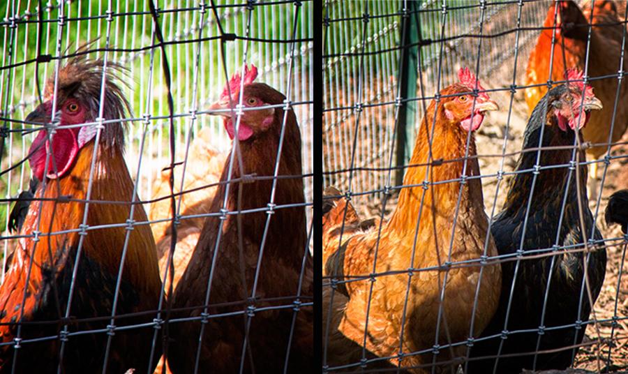Non-fried Chicken
