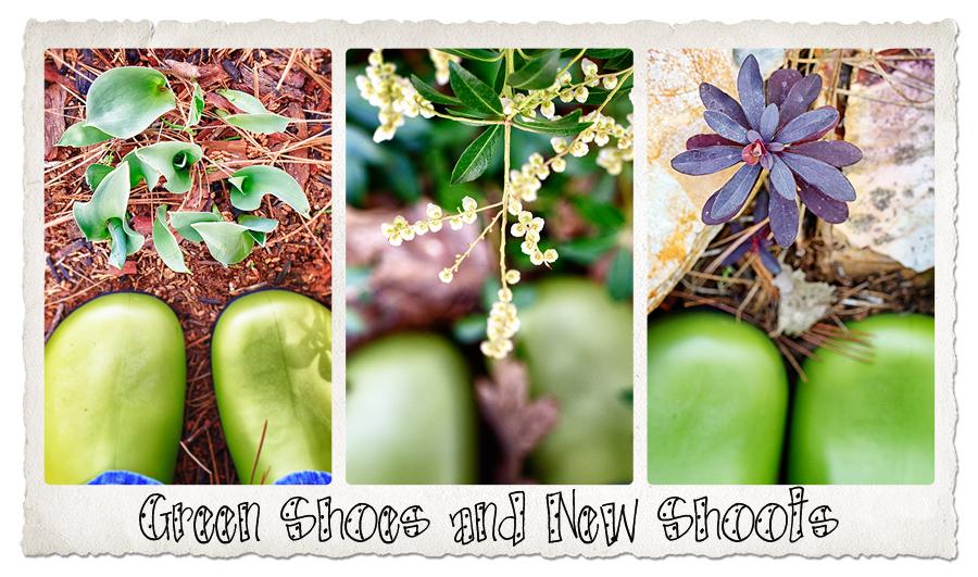greenshoes_newshoots