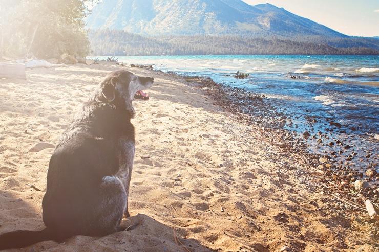 Obie T. Dogg at the beach last fall.