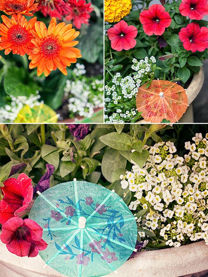 Flowers and Umbrellas