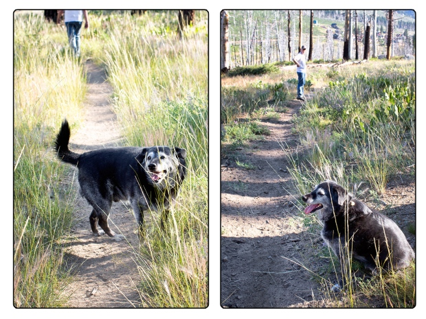 Obie T. Dogg and Yes!Chef! love their walks in the forest