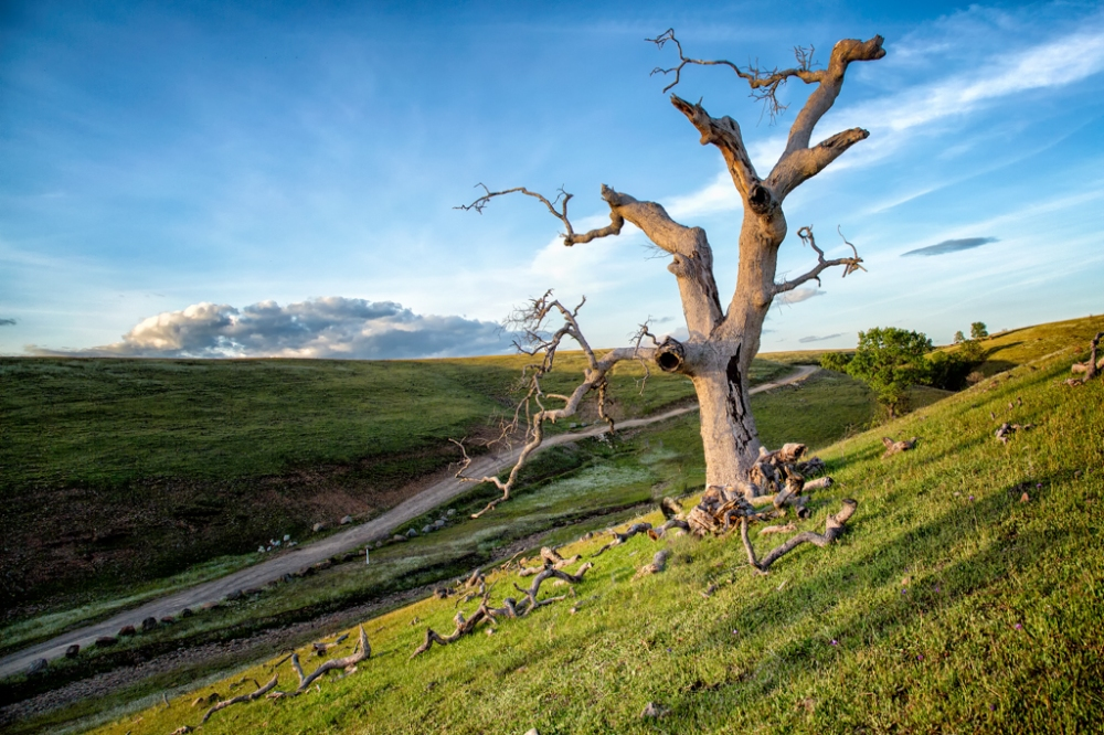 Lone tree on a tall hill