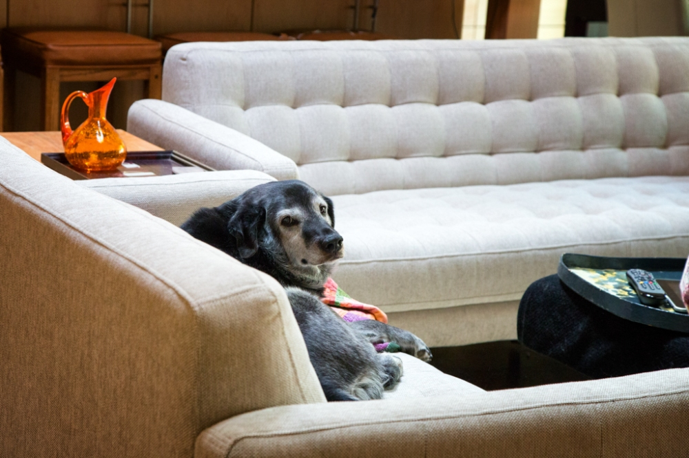 Obie T. Dogg making himself at home on my new couch