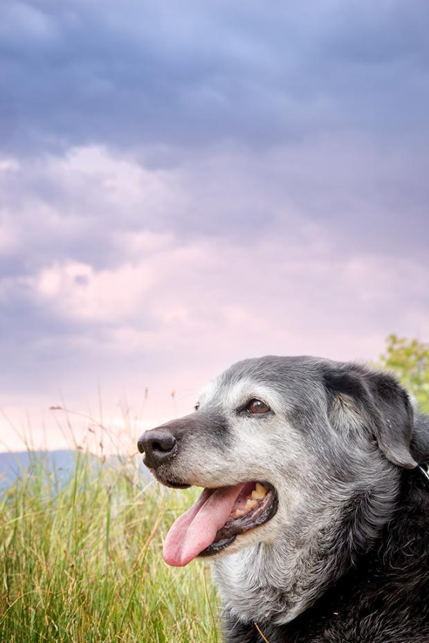 Obie T. Dogg...star of Lake Tahoe