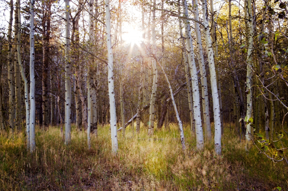 Sunset on the Aspens