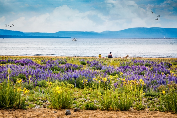 A summer day at the beach (Lake Tahoe)