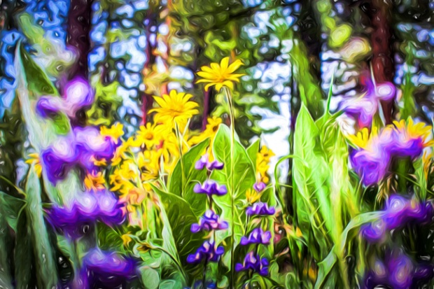 Skunk Cabbage and Lupines