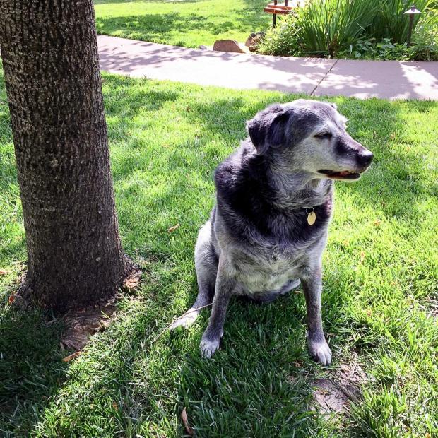 Obie T. Dogg, looking dapper and ever-vigilant.